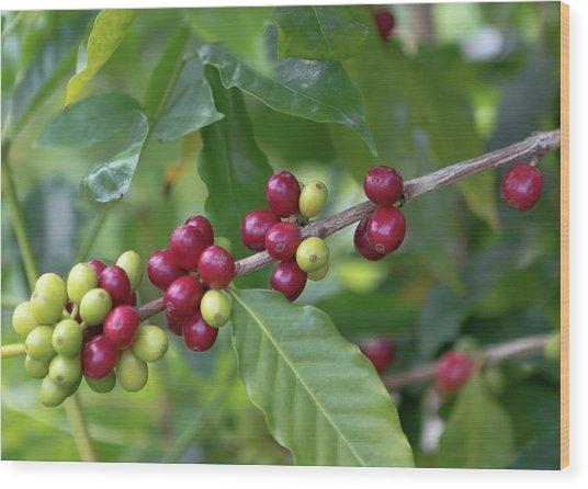 Kona Coffee Cherries Wood Print