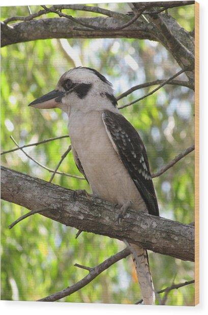 Kookaburra Wood Print by Derek Donoghue