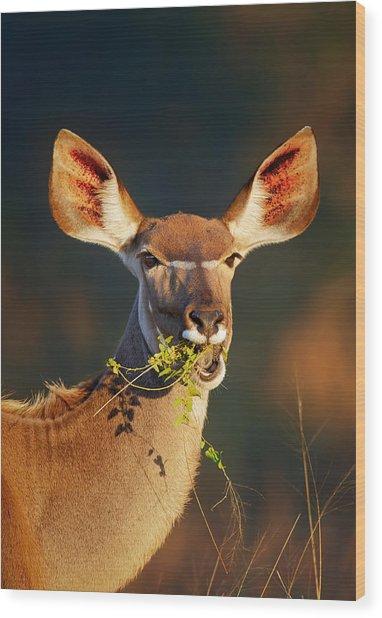 Kudu Portrait Eating Green Leaves Wood Print