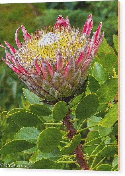 Kula Breeze Wood Print