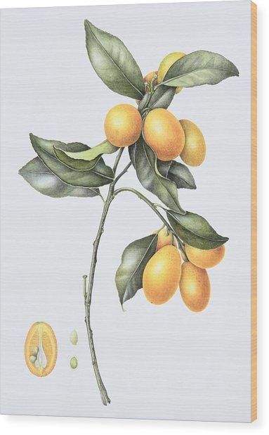 Kumquat Wood Print