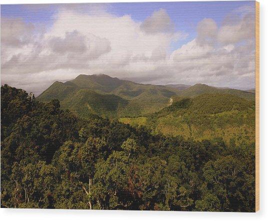 Kuranda Queensland Wood Print by Tony Brown