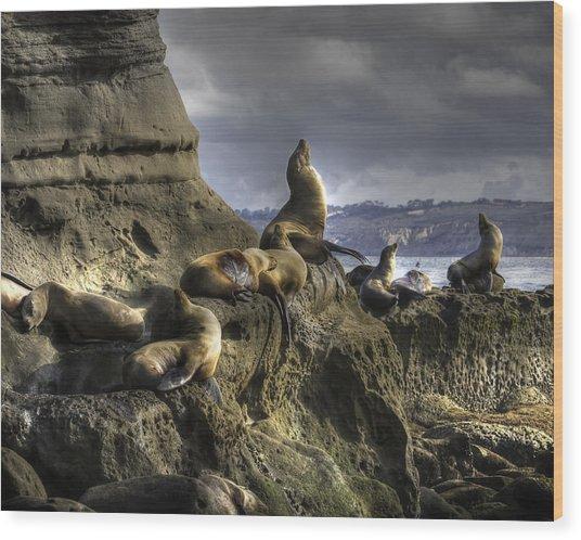 La Jolla Seals Wood Print
