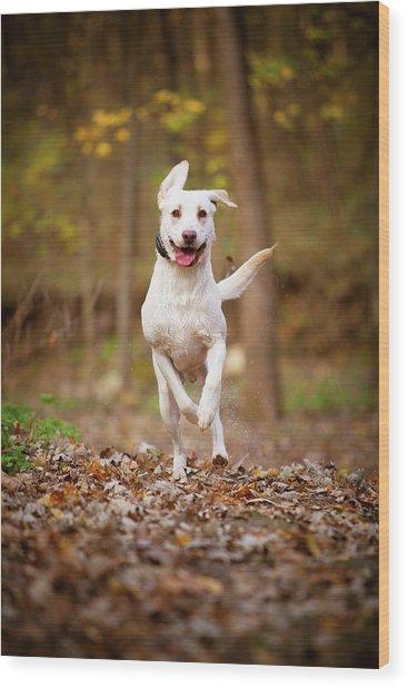 Labrador Frolics In Woodlands Wood Print