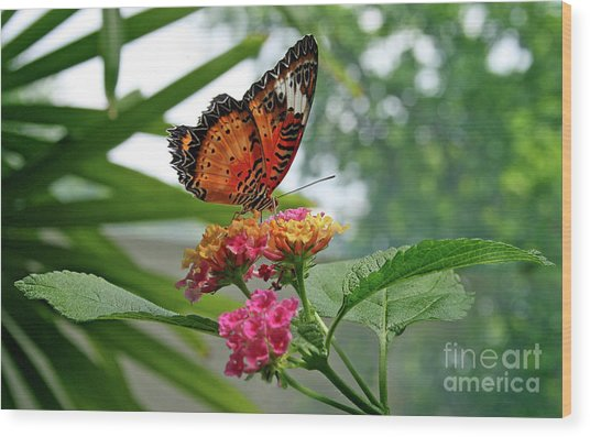 Lacewing Butterfly Wood Print