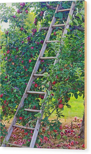 Ladder To The Top Wood Print