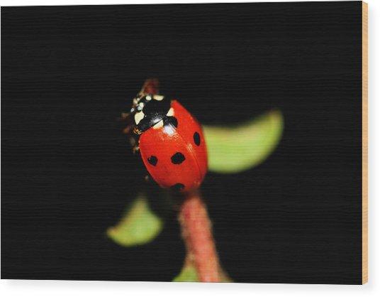 Lady Bug Climb Wood Print by Nick Gustafson