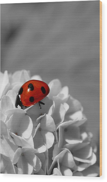 Lady Bug Sc Wood Print