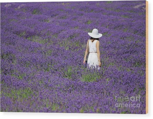 Lady In Lavender Field Wood Print