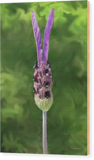 Lady Lavender Wood Print