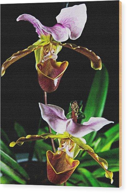 Lady Slipper Orchid Wood Print