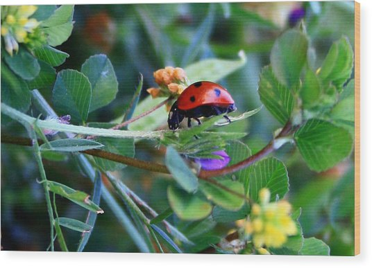 Ladybug Haven Wood Print