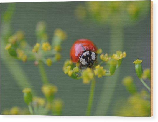 Ladybug In Red Wood Print