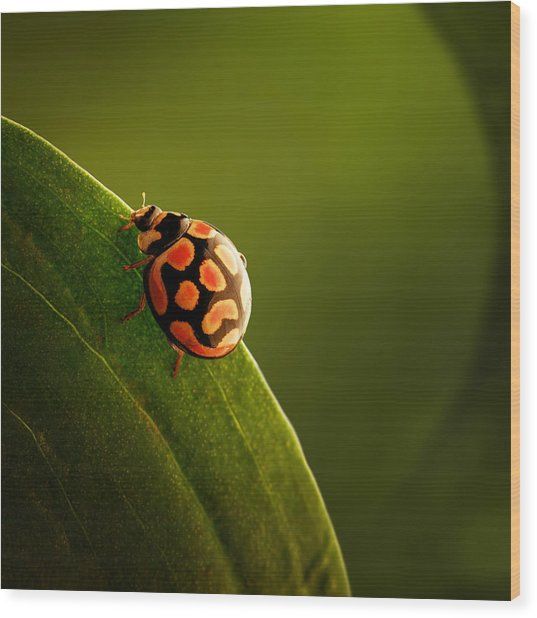Ladybug  On Green Leaf Wood Print