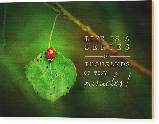 Ladybug On Leaf Thousand Miracles Quote Wood Print