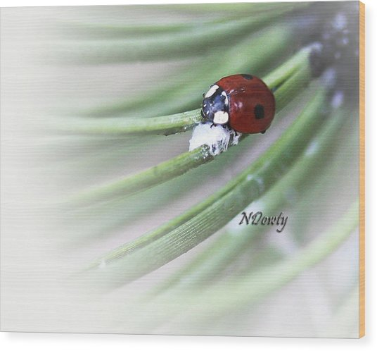 Ladybug On Pine Wood Print
