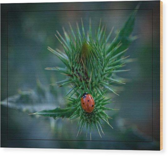 Ladybug On Thistle Wood Print