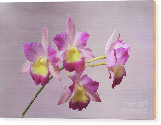 Laeliocatonia Hybrid Orchids V2 Wood Print