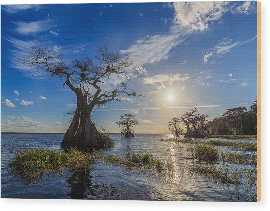 Lake Disston Cypress Paradise Wood Print