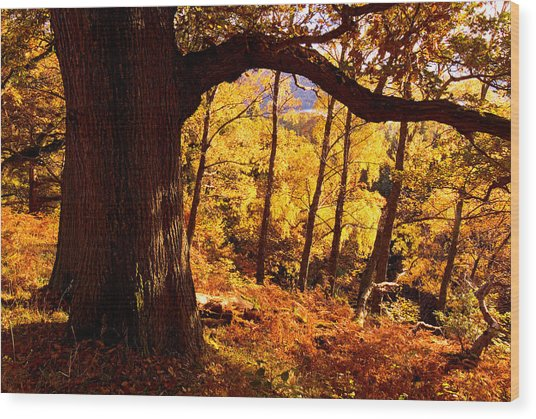 Lake District - Fall Colors Near Aira Force Wood Print by Dave Lawrance