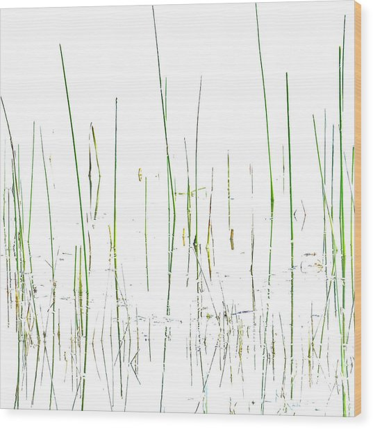 Lake Grass Wood Print
