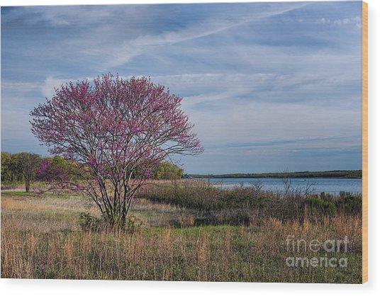 Lake Murray Redbud Tree Wood Print