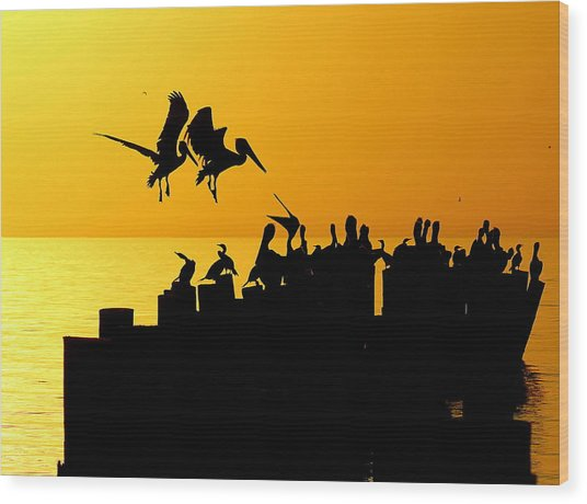 Landing In The Sunset Wood Print