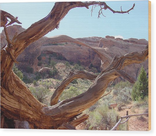 Landscape Arch Wood Print by Dave Clark