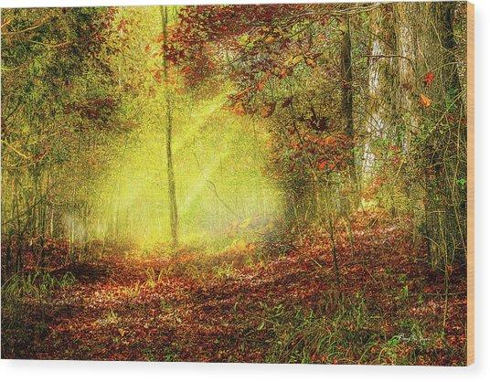 Landscape - Sunbeams - Woodland Trail Wood Print by Barry Jones