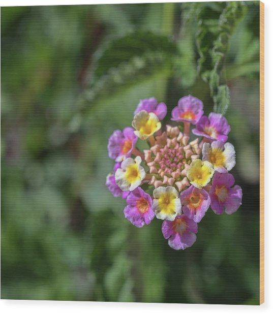 Lantana In Bloom Wood Print