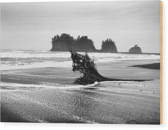 Lapush Washington Wood Print by Todd Fox
