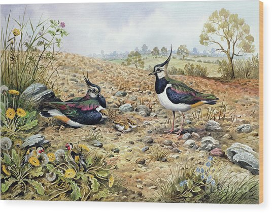 Lapwing Family With Goldfinches Wood Print