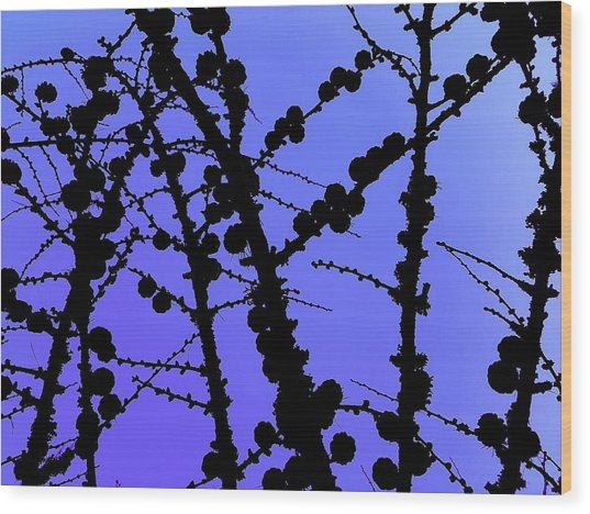 Larch Cones Against The Sky Wood Print