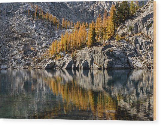 Larch Reflection In Enchantments Wood Print