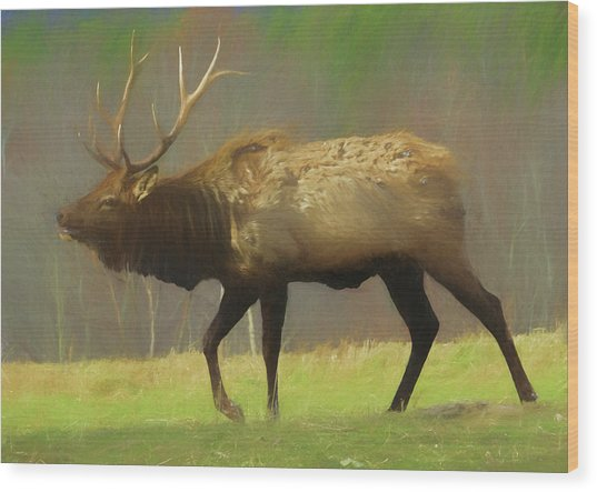 Large Pennsylvania Bull Elk. Wood Print