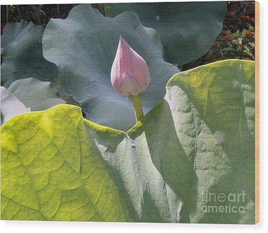 Large Pink Chinese Lotus Bud Wood Print by Kathy Daxon