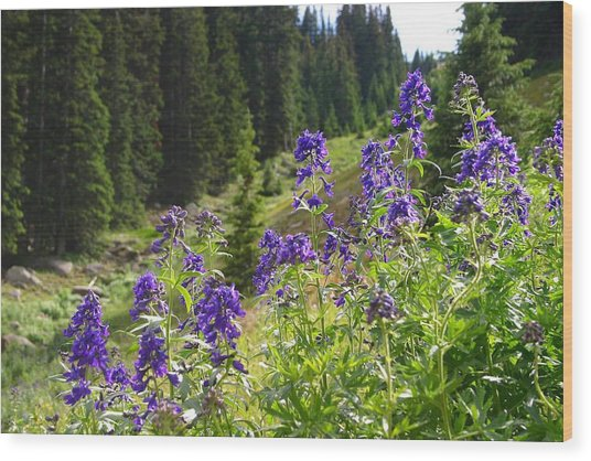 Larkspur Along Trail Ridge Road Wood Print by Perspective Imagery