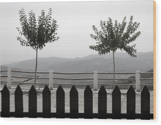 Laroles 38 Wood Print by Jez C Self