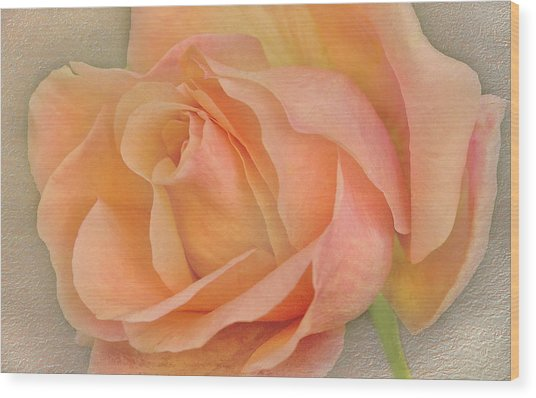 Last Autumn Rose Wood Print