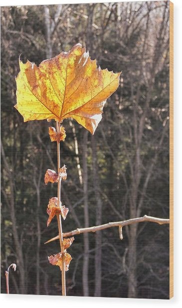 Last Leaf Wood Print by JAMART Photography