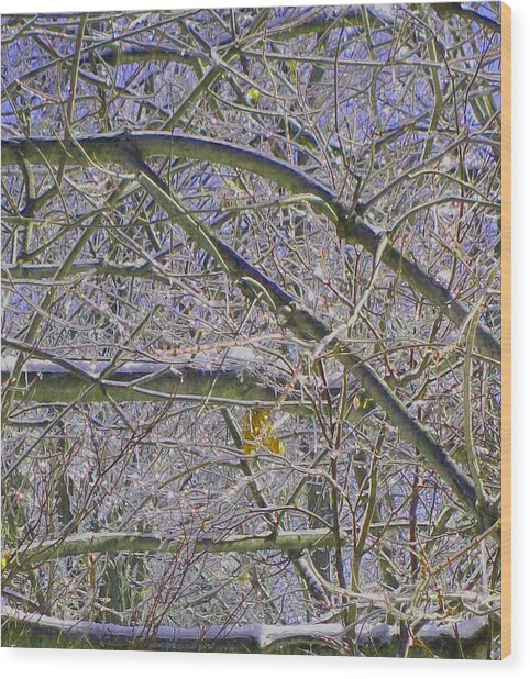 Last Leaf Of Winter Wood Print by Misty VanPool