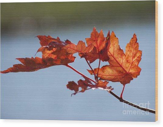 Last Of The Leaves Wood Print by Joy Bradley