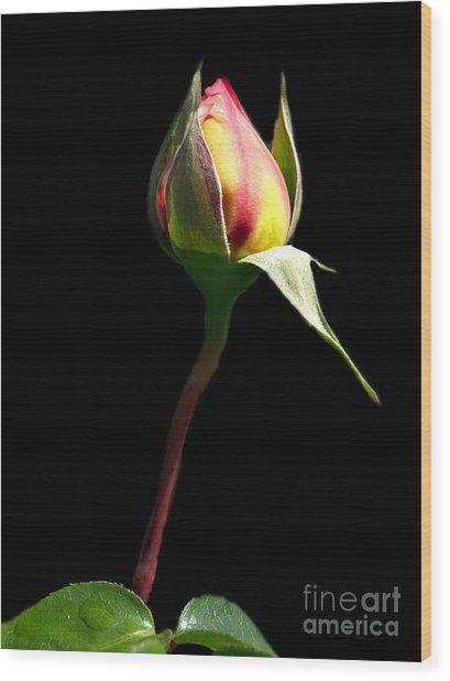 Last Rose Of Summer Wood Print by Kathy Jennings