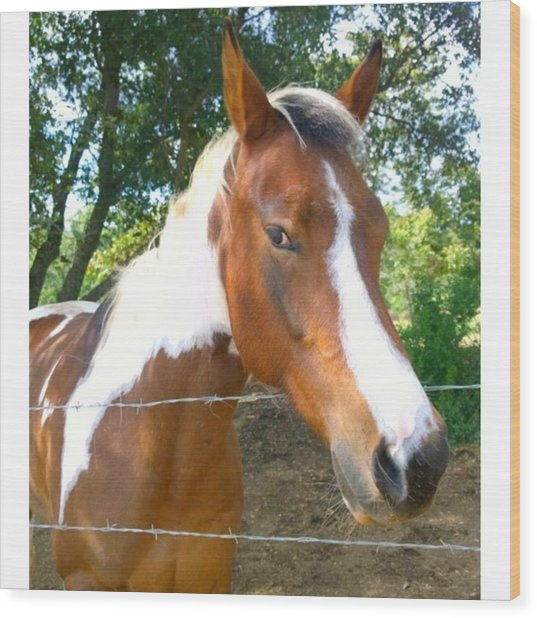 Last Week, I Met My First #horse! She Wood Print