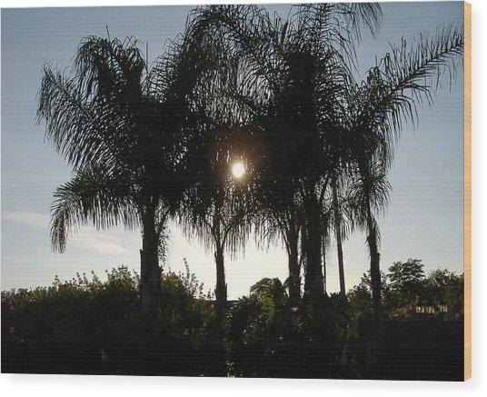 Late Afternoon Sun Wood Print