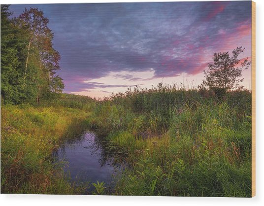 Late Summer Color At Blue Marsh Wood Print