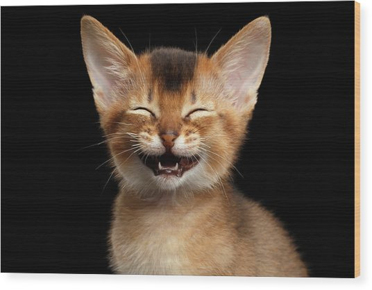 Laughing Kitten  Wood Print