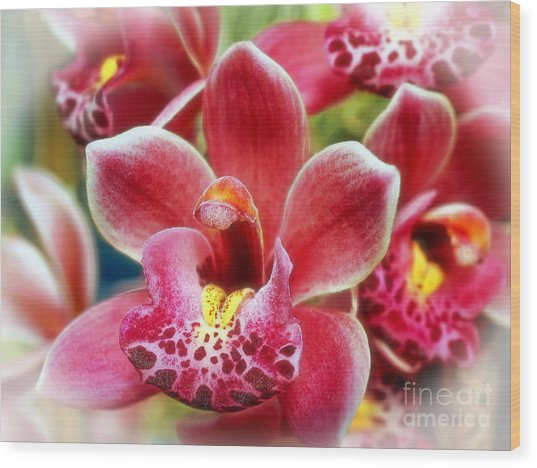 Laughing Orchids Wood Print