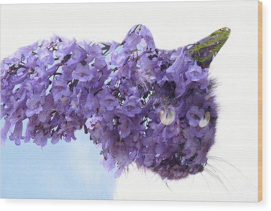 Laurel Kitty Wood Print