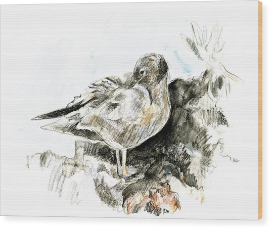 Lava Gull Wood Print